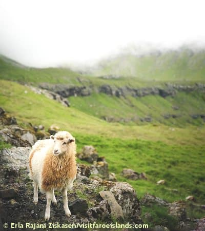 Sheep View 360 Mappatura Faroe
